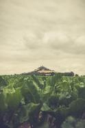 Burg Desenberg